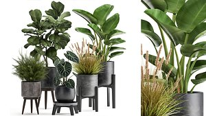 3D Houseplants in a rust flowerpot for the interior 998