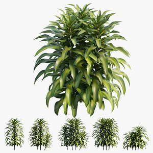Dracaena Corn Plant set 03 3D model