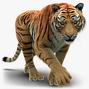 3D Tiger 3 FUR Rigged