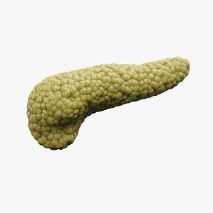 Pancreas 3D model