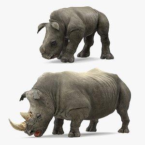 3D drinking rhinos