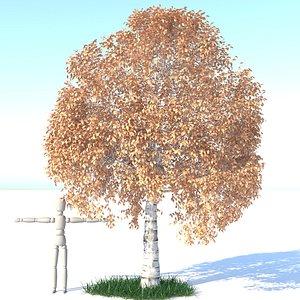 3D aspen tree grass model