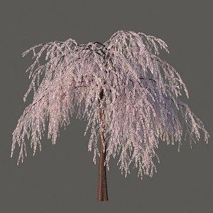 XfrogPlants Weeping Higan Cherry - Prunus Subhirtella model