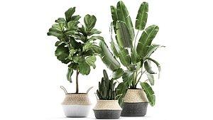 3D plants rattan basket trees model