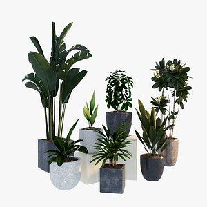 plants set 3D model