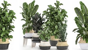 plants baskets 3D model