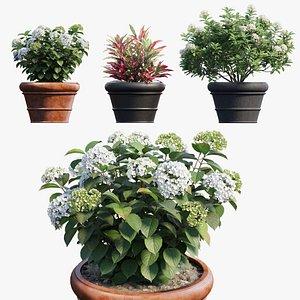 hydrangea plant planters model