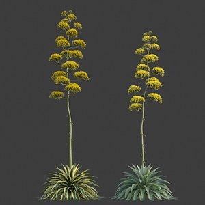 XfrogPlants Century Plant - Agave Americana 3D