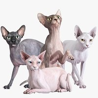 Sphynx Cat Posed Collection