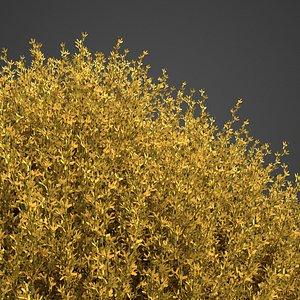 3D model forsythia flower nature