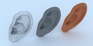 3D ear human organ model