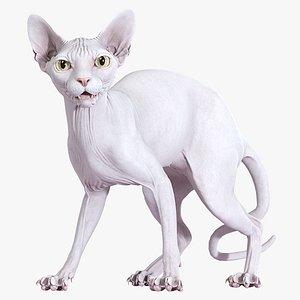 sphynx cat standing model