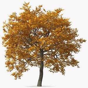 3D walnut tree nut