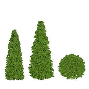 3D thuja tree model