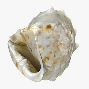 3D Conch Shell