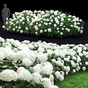 3D hydrangea hedge