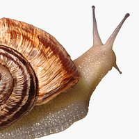 Snail Rigged
