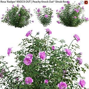 3D Rosa Radgor KNOCK OUT - rose 01