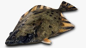 3D Starry Flounder model