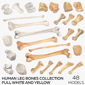 3D Human Leg Bones Collection Full White and Yellow -  48 models model