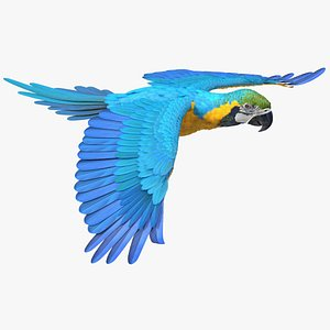 Blue and Yellow Macaw Parrot Flight Pose model