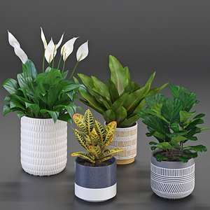 3D houseplant