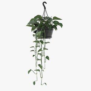 golden pothos plant hanging 3D model