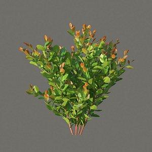 XfrogPlants Cocoplum - Chrysobalanus Icaco 3D model