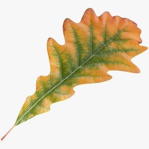 3D Oak Leaf V3