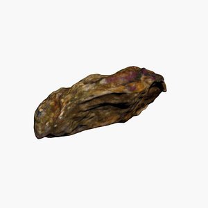 3D model Oyster 3D Scan High Quality