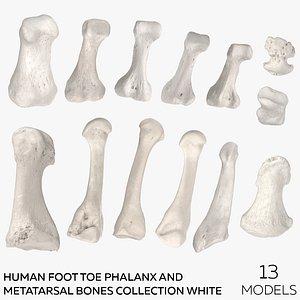 3D model Human Foot Toe Phalanx and Metatarsal Bones Collection White - 13 models