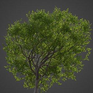 tree nature 3D