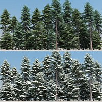 20 20 Cedar Trees