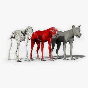 3D model wolf anatomy