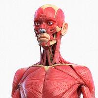 Full Body Muscle Anatomy