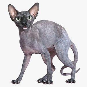 3D model sphynx cat standing