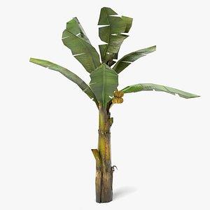 3D model Banana Tree