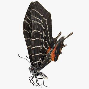 3D model Animated Flight Bhutan Glory Butterfly Rigged for Maya