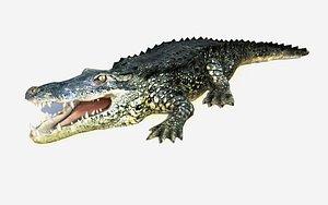 alligator rigged crocodile animations model