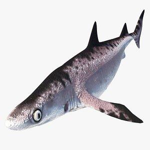 prehistory shark dinosaur megalodon 3D model