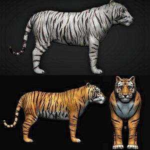 fully rigged tiger 3D