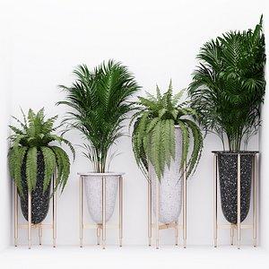 fern palm corner 3D model