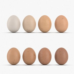 Pack of realistic eggs model