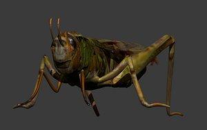 3D model lubber grasshopper