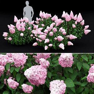 3D hydrangea bushes model