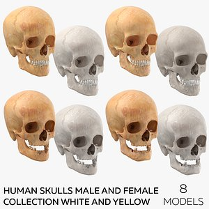 3D Human Skulls Male And Female Collection White and Yellow -  8 models