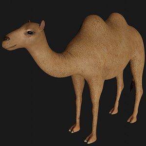 fully rigged camel 3D model