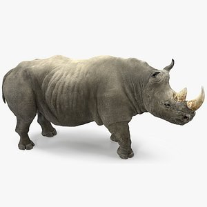 rhino rigged 3D model