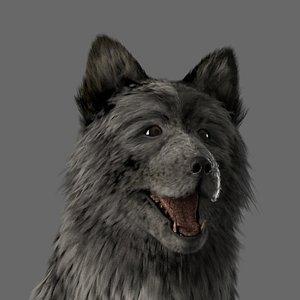 wolf dog fur 3D model