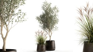 Houseplants in a rusty flowerpot for the interior 974 3D